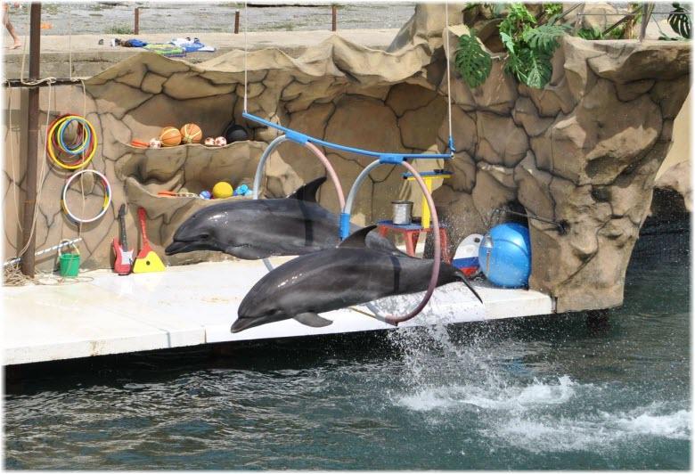 большой утриш дельфинарий