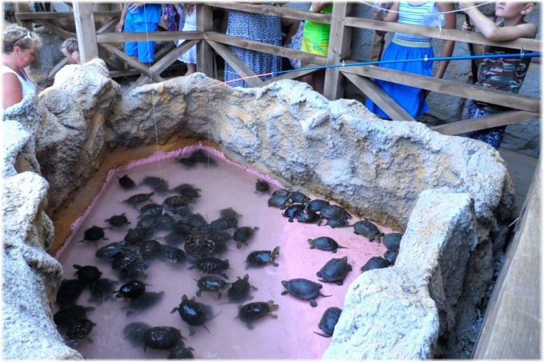 ферма крокодилов голубицкая фото черепашек