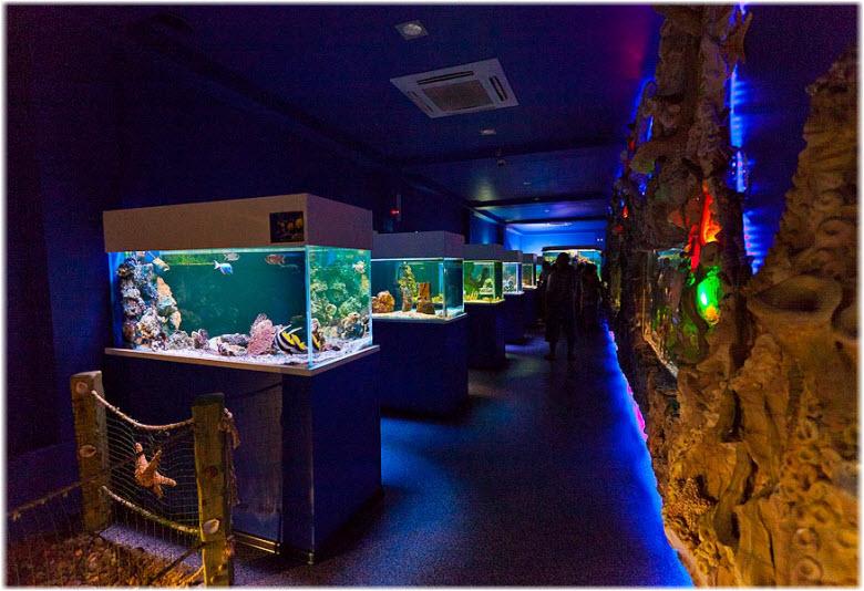 Фото внутри океанариума