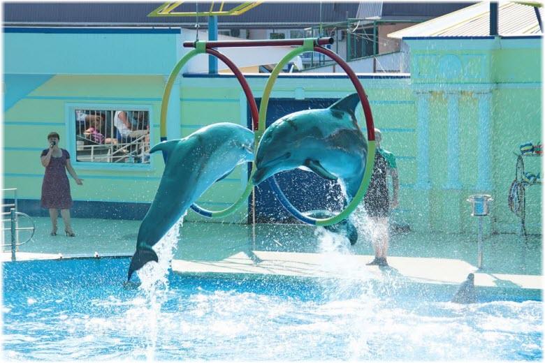 дельфины дельфинария Небуг