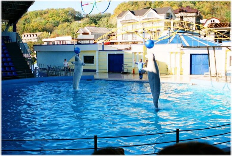 шоу в небугском дельфинарии