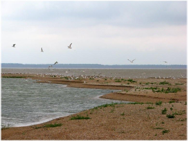фото птиц на Камышеватке