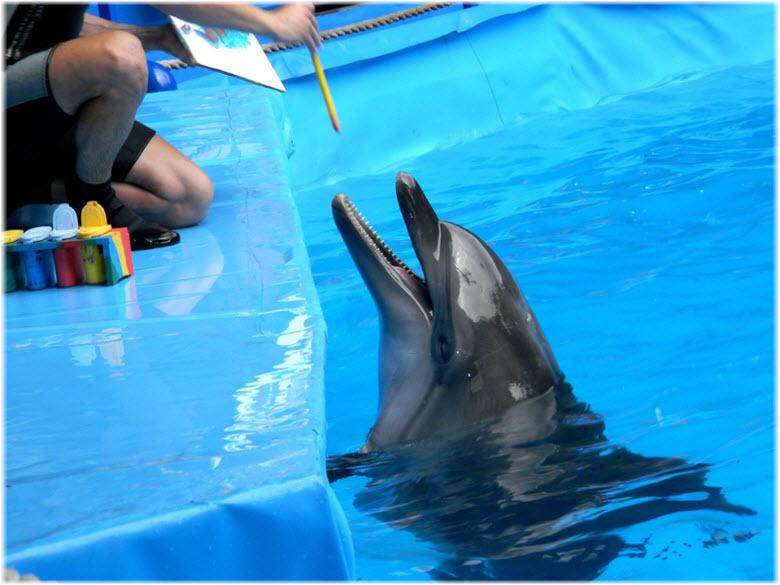 дельфины в Кабардинке