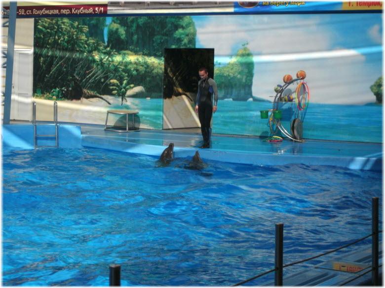 фото в дельфинарии Немо