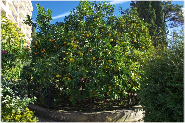 фрукты на Дереве Дружбы