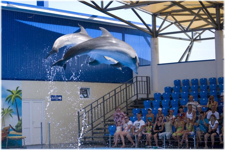 представления дельфинов в Голубицкой