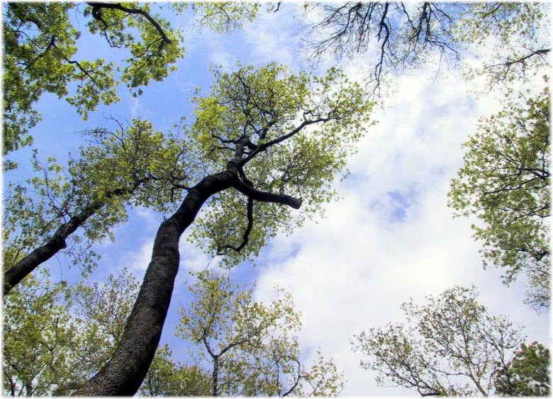 деревья в Цемесской роще