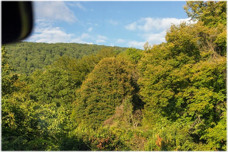 леса вокруг Ахуна