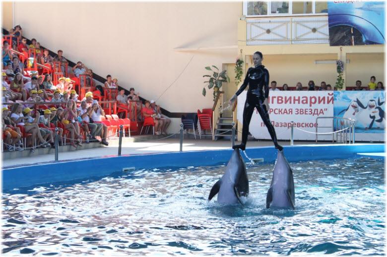 трюки в дельфинарии