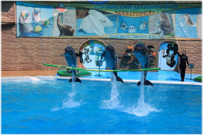 фото Адлерского дельфинария