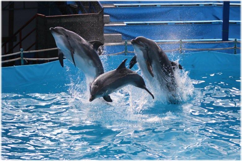 фото дельфинов дельфинария в Новороссийске