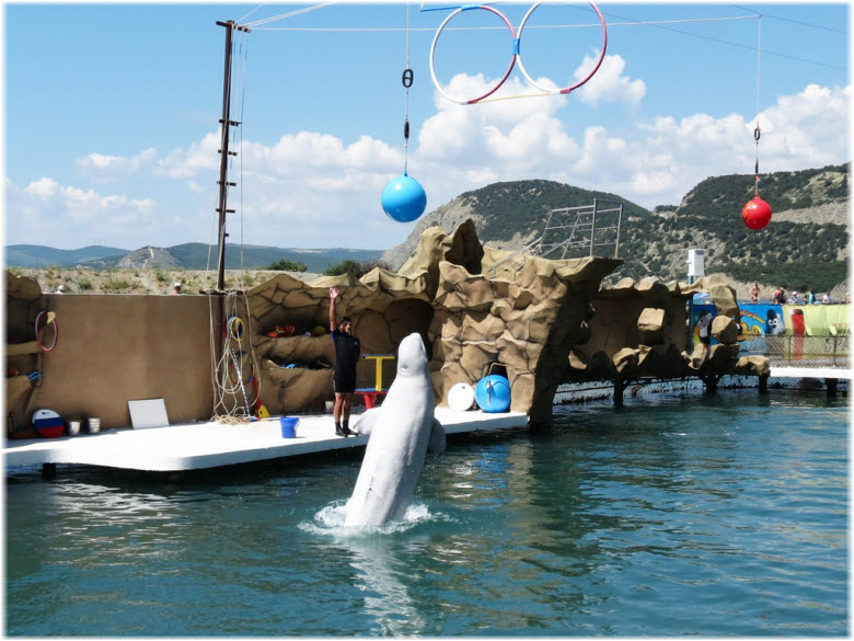 фото в Анапском дельфинарии