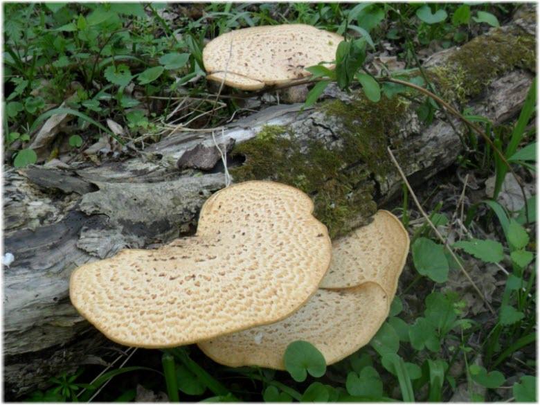 грибы в Красном лесу