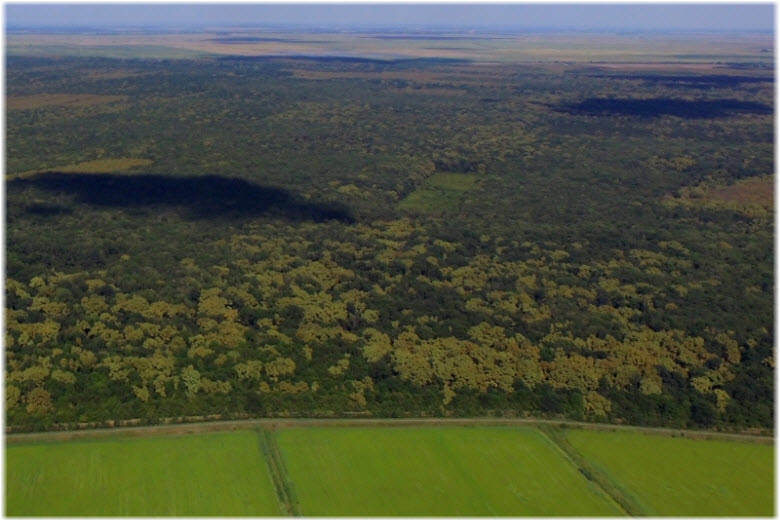 Красный лес в Краснодарском крае