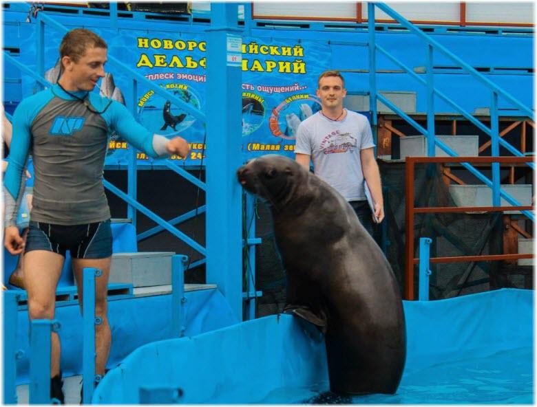 морской лев в дельфинарии