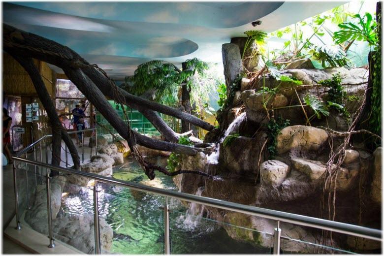 Тропическая Амазонка в Лазаревском