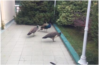 зоопарк Октябрьский в Сочи