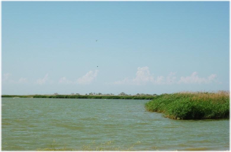 растительность и пляжи Зеленого острова