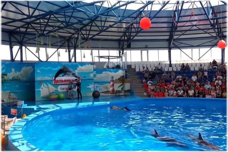 фото в дельфинарии Сочи-парка