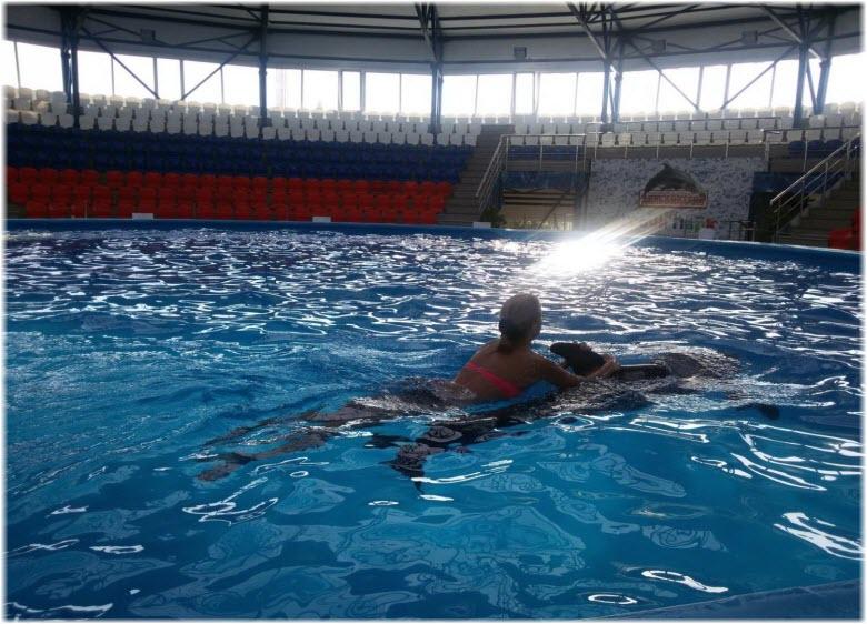 плавание с дельфинами в Сочи-парке