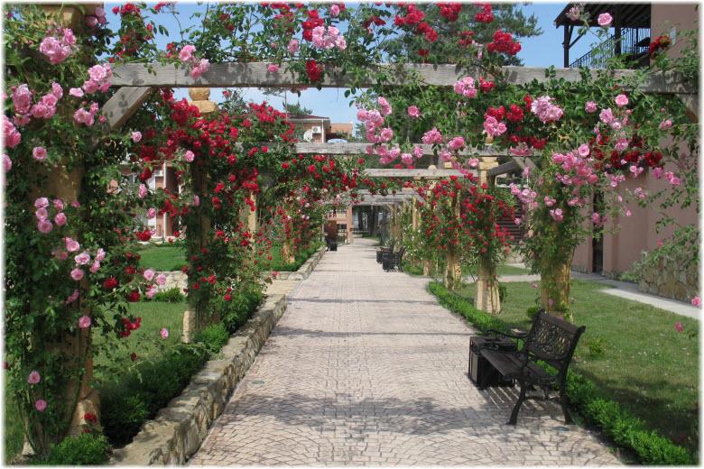 аллея роз анапа