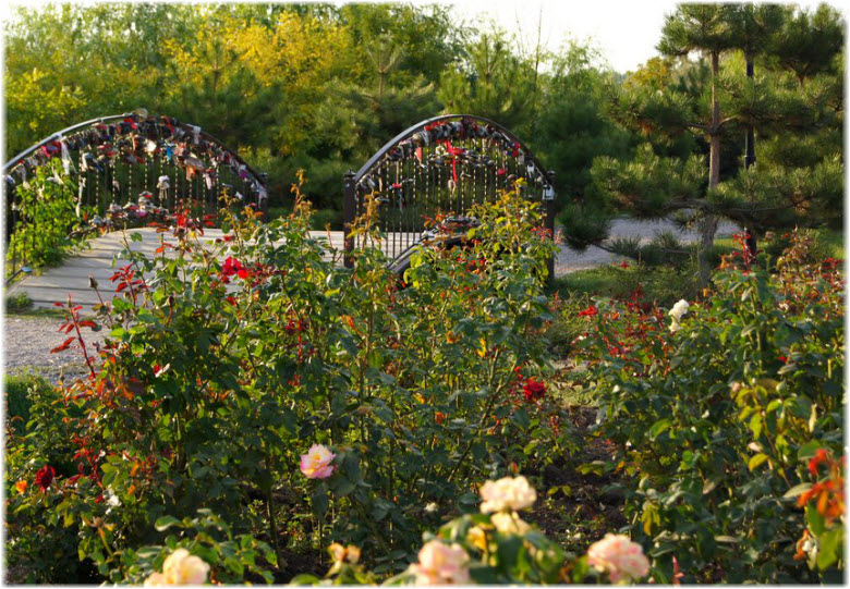 аллея роз в анапе фото