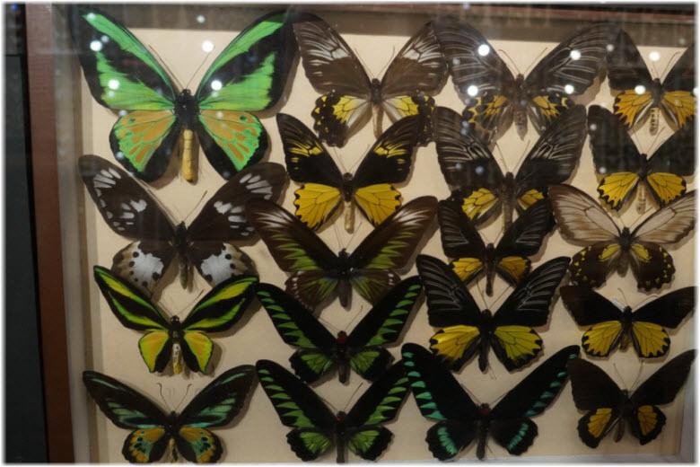 музей бабочек анапа
