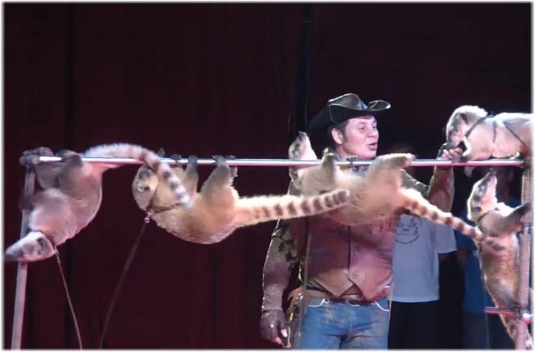 цирк никулина в анапе фото