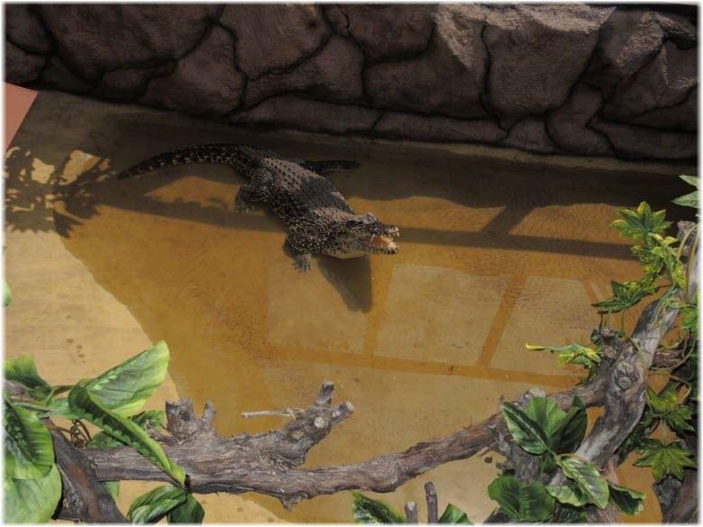 крокодилы на ферме в анапе фото
