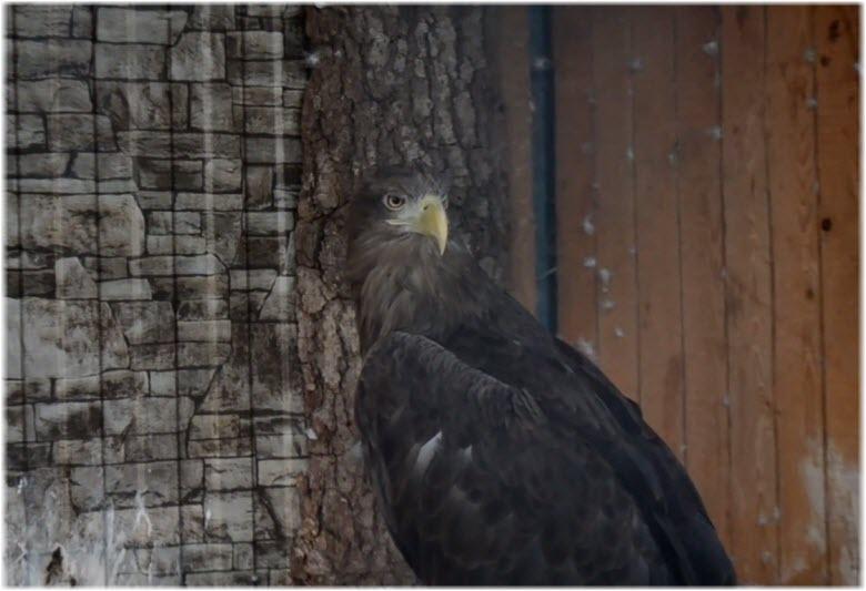 птицы в зоопарке лукоморье