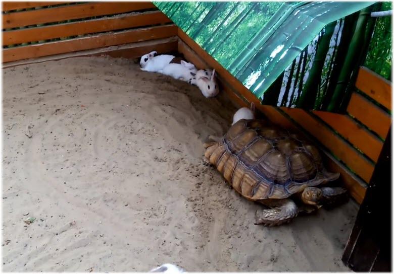 Черепаха и кролики на ферме крокодилов