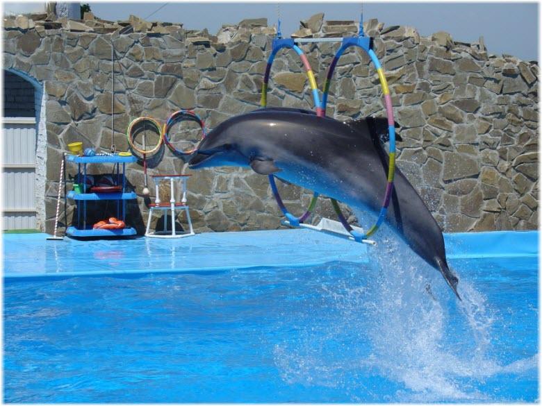 Дельфины в дельфинарии г. Ейск