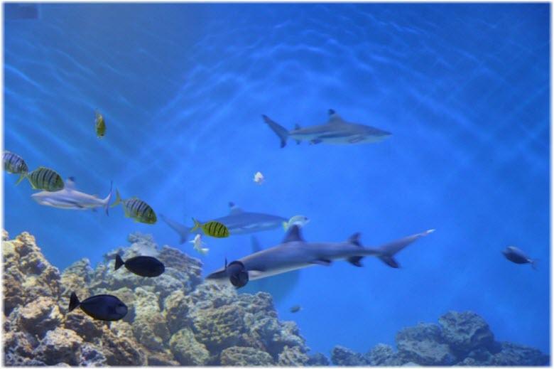 океанариум Акулий риф