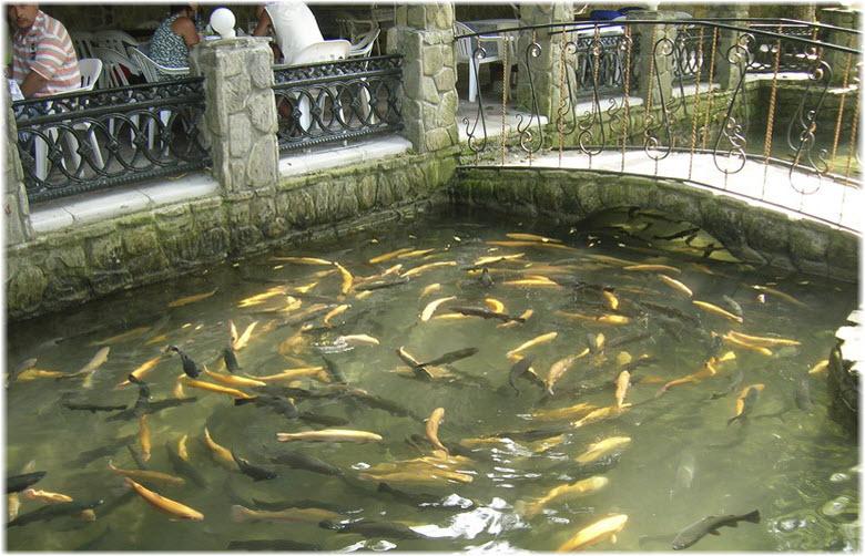 рыба возле родника Наташа
