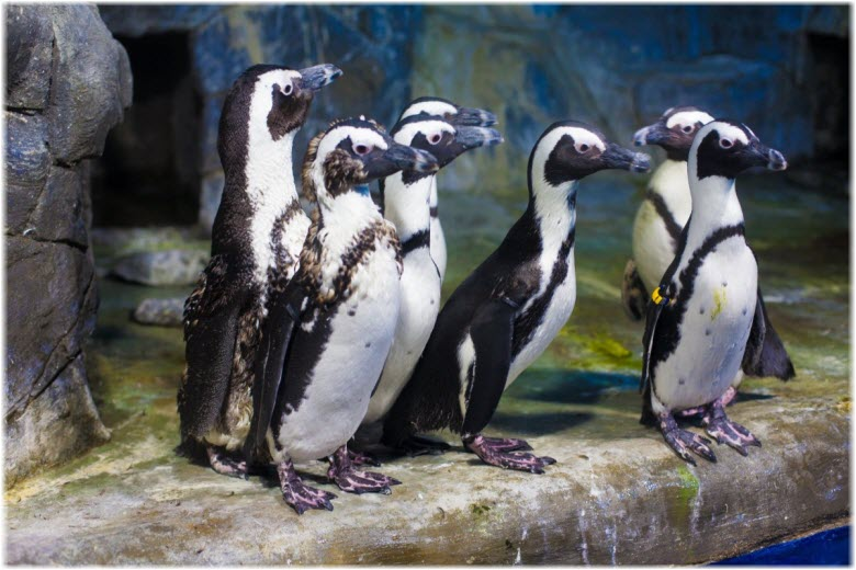 Пингвинарий в Джемете