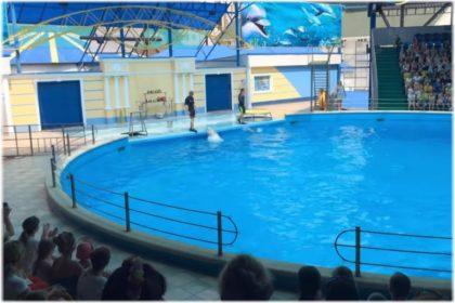 дельфинарий Небуг