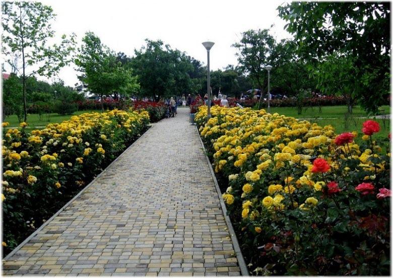 цветы в Ореховой роще