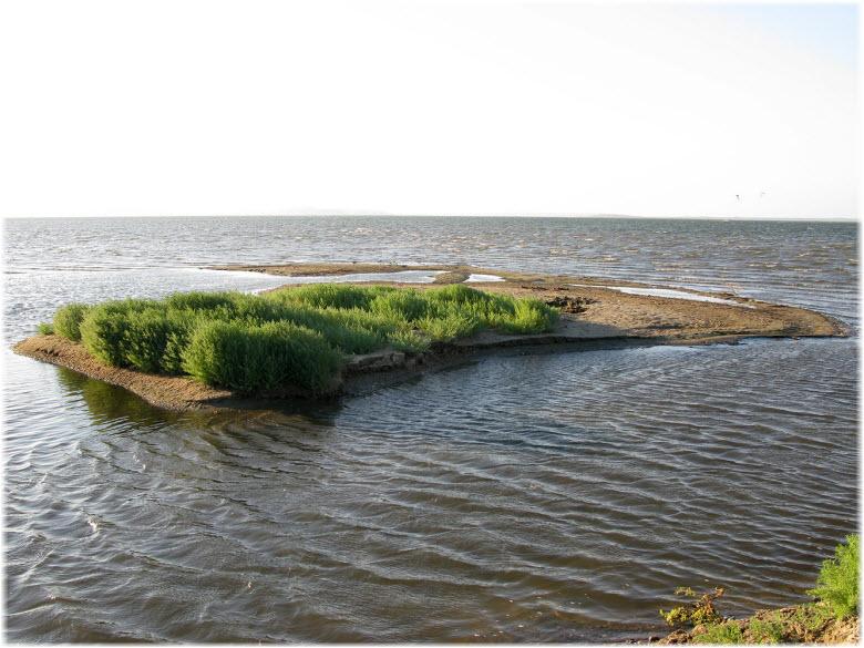 островок в Кизилташском лимане