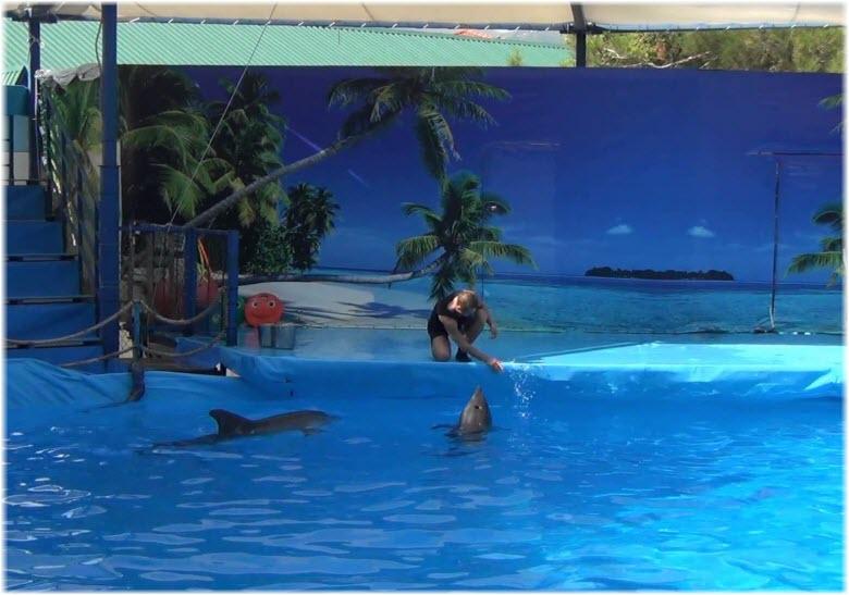 шоу в Кабардинском дельфинарии