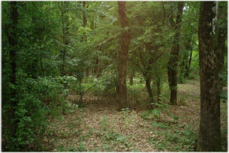 Челбасский лес