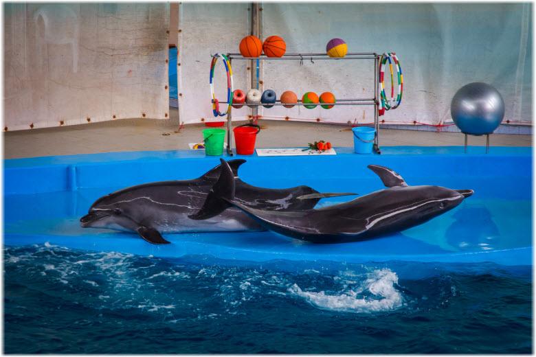 дельфины Морской звезды