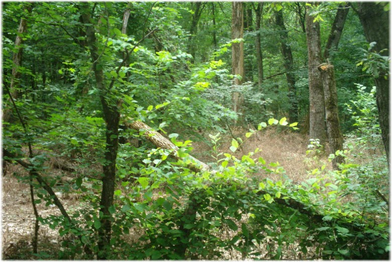 фото лесной флоры