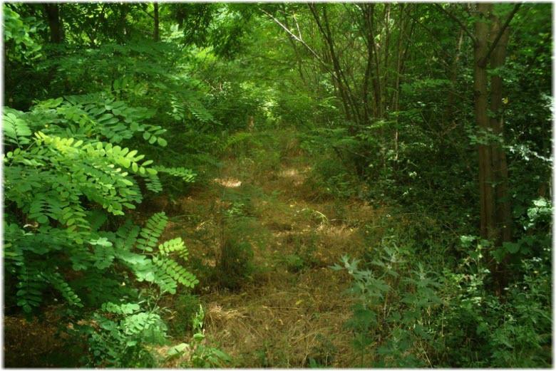 фото в Челбасском лесу