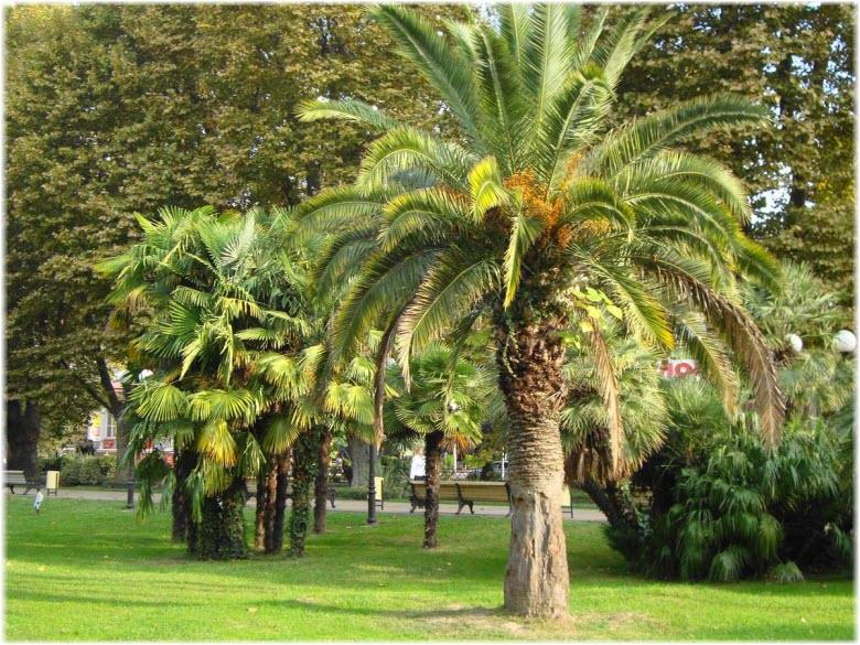 пальмы на Платановой аллее