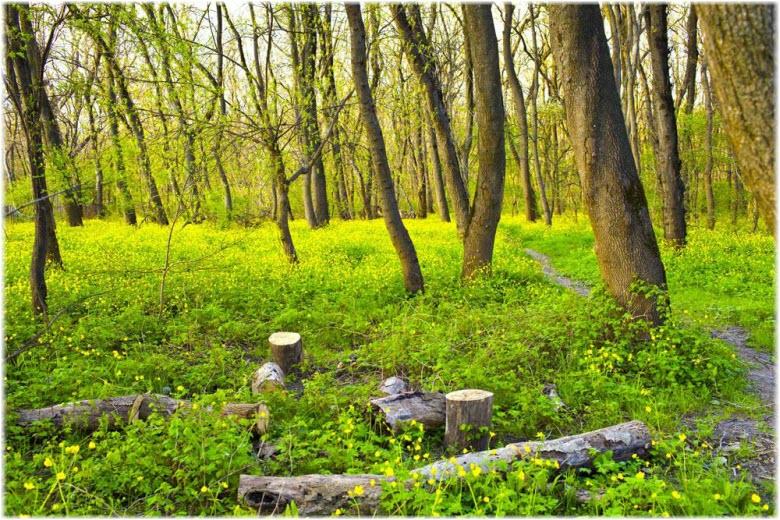 весна в парке Цемесская роща