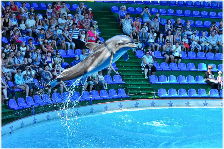 дельфинарий в Адлере