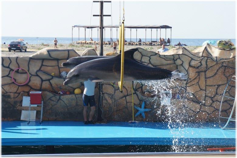 дельфины прыгают через обруч