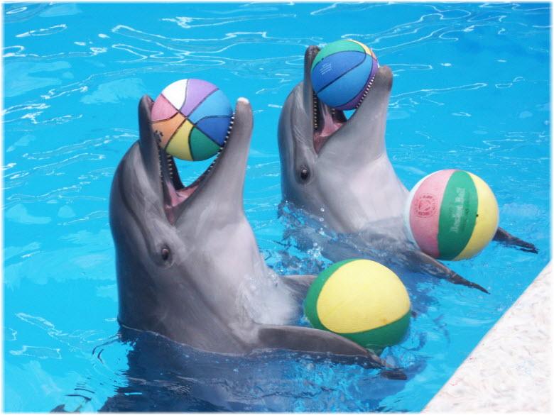 дельфины в дельфинарии