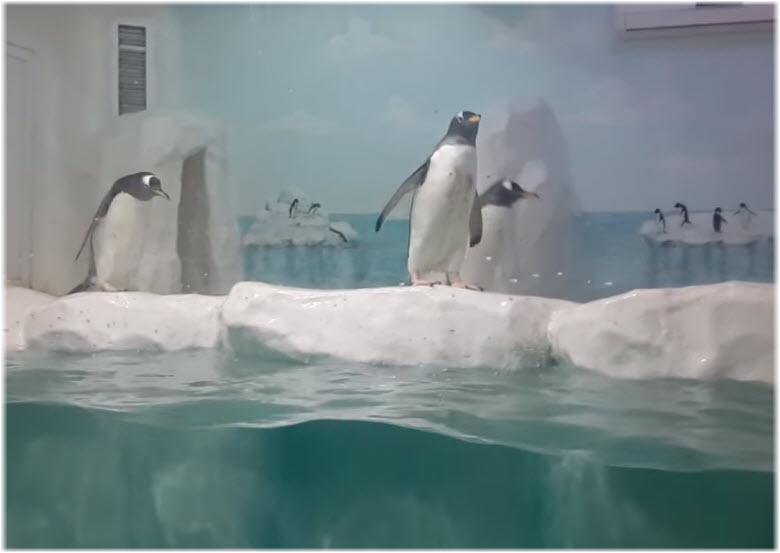 фото в пингвинарии