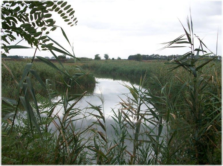 рыбалка на реке Кирпили